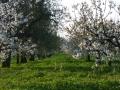 esterni i ciliegi e gli olivi
